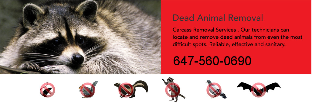 dead-animal-removal-toronto.jpeg